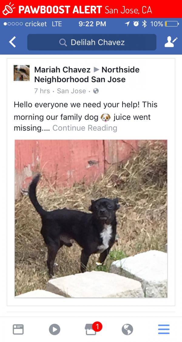 lost male dog in san jose ca 95112 named juice id 4674741 pawboost
