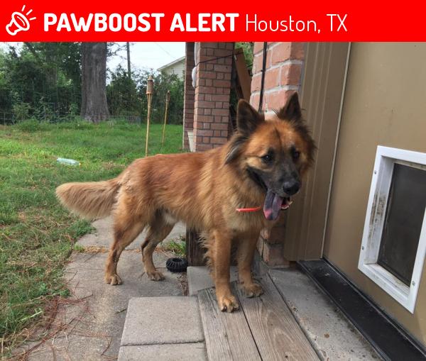Found/Stray Male Dog in Houston, TX 77084 (ID: 4686020) | PawBoost