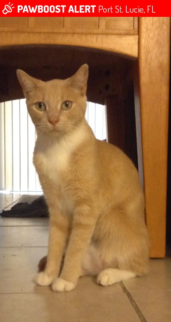 Lucie Cat