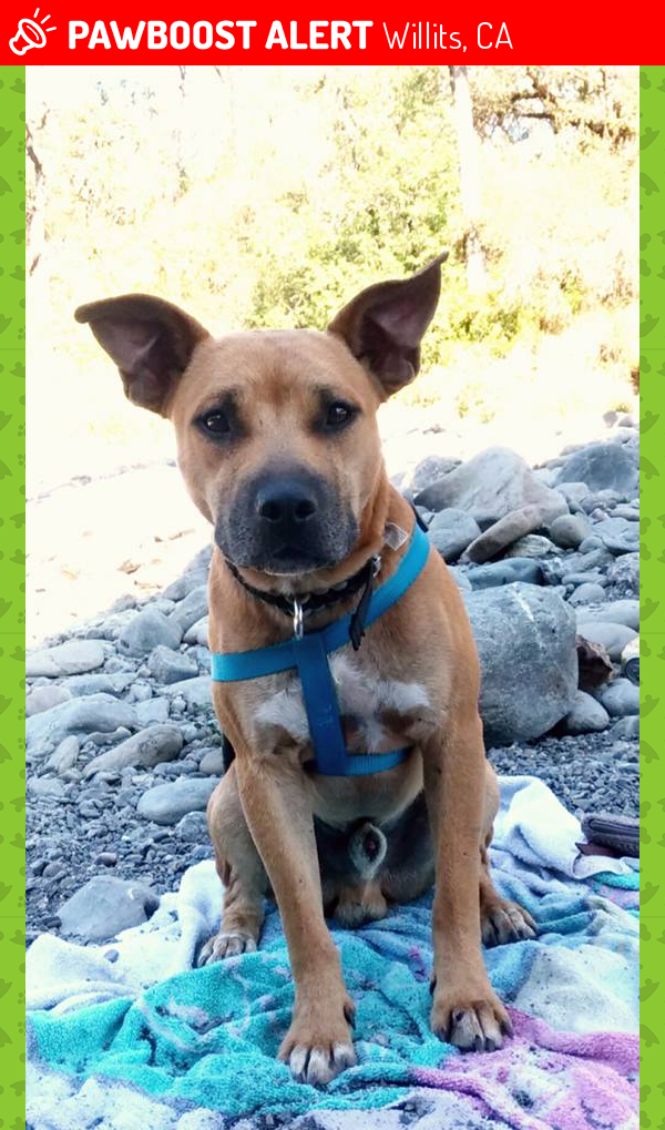 Lost Male Dog last seen Near Penn St & E Valley St, Willits, CA 95490