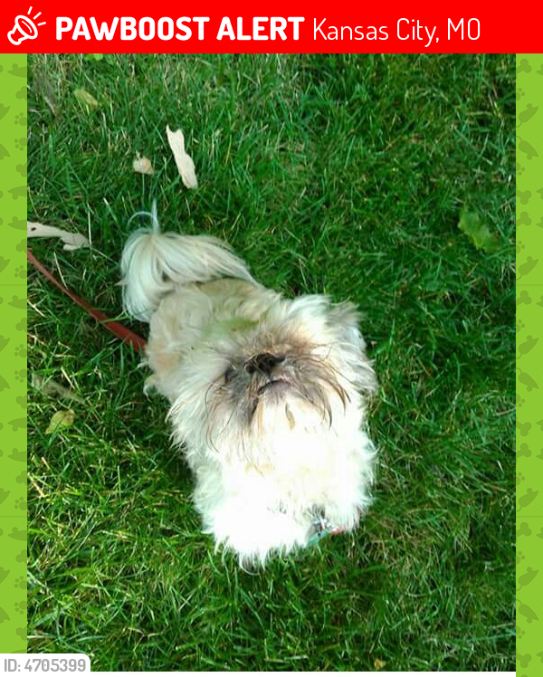 Lost Male Dog In Kansas City Mo 64131 Named Ted Id 4705399
