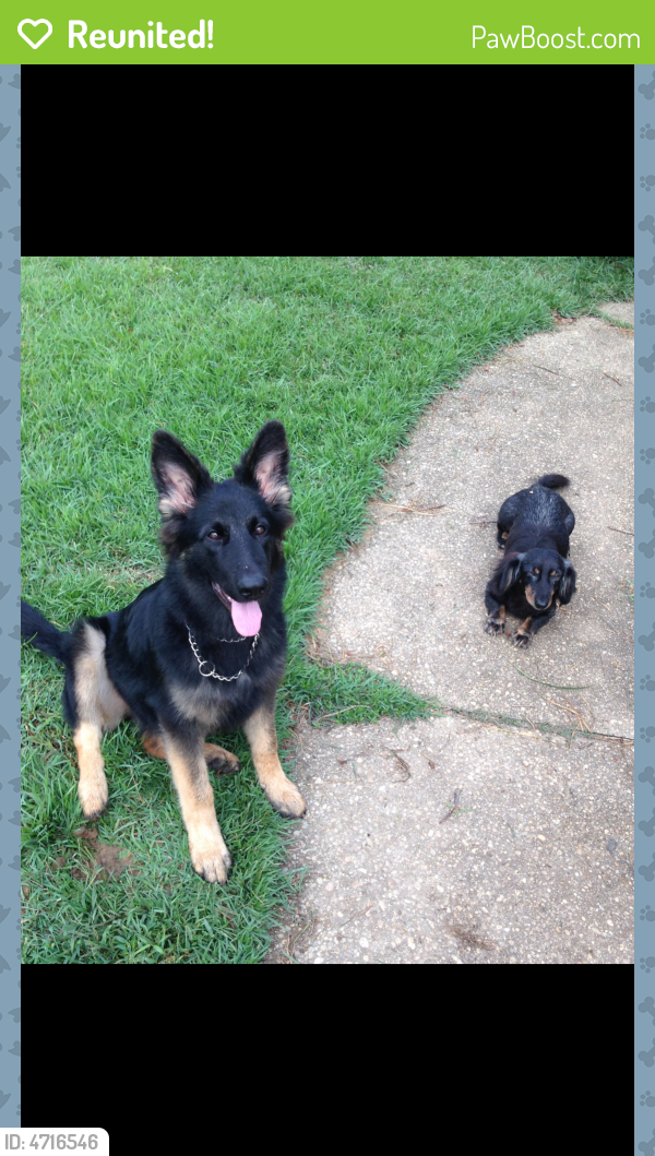 Reunited Male Dog in Pensacola, FL 32526 (ID: 4716546