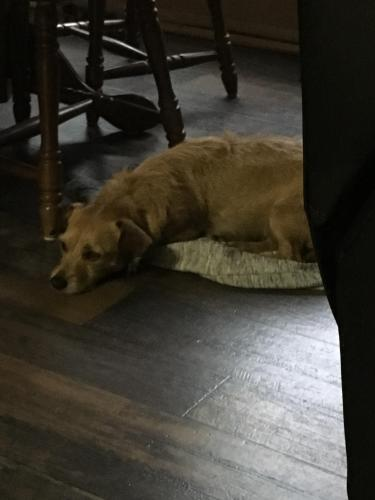Lost Female Dog last seen Near World Champion Ct & Thoroughbred Ct, Fort Worth, TX 76179