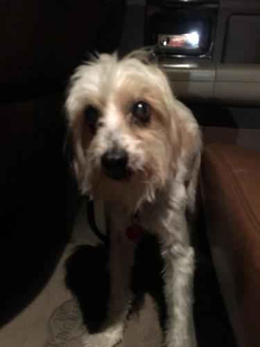 Found Male Dog last seen Covell Road, Edmond, OK, Edmond, OK 73012