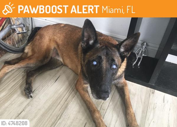 Rehomed Female Dog last seen Near NE 19th Ter & NE 2nd Ave, Miami, FL 33137