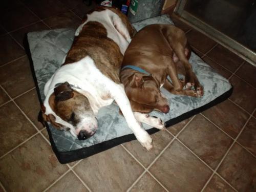 Lost Male Dog last seen Near Barnett Shoals Rd & E Whitehall Rd, Athens, GA 30605