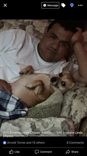 Lost Female Dog last seen Near Bryant Quarter Road, Gillsville, GA, Gillsville, GA 30543