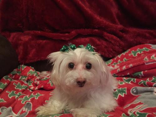 Lost Female Dog last seen Near Rose Lily Pl & Lilac Arbor Rd, Dacula, GA 30019