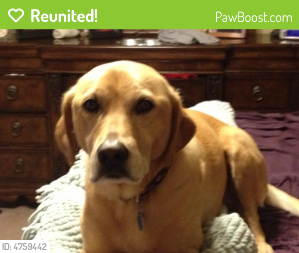 Reunited Female Dog last seen Near Chace Lake Dr & Waterford Pl, Hoover, AL 35244