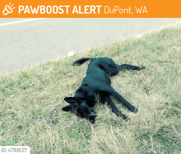 Deceased Dog in DuPont, WA 98327 (ID: 4781627) | PawBoost