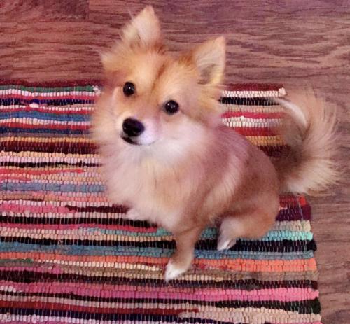 Lost Female Dog last seen Near NW 11th Ave & NW 49th Ct, Pompano Beach, FL 33064