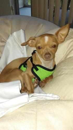 Lost Male Dog last seen Near SW 17th St & SW 63rd Ave, Pompano Beach, FL 33068