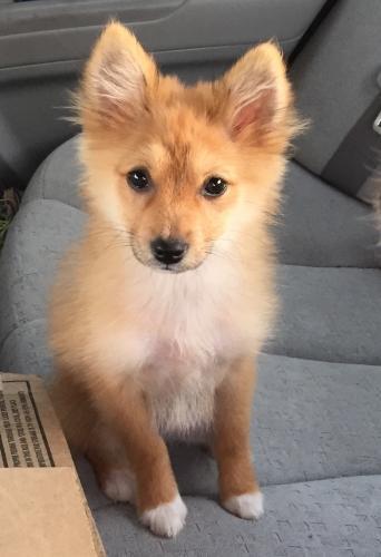 Lost Female Dog last seen Near NE 11th Ave & NE 24th St, Pompano Beach, FL 33064