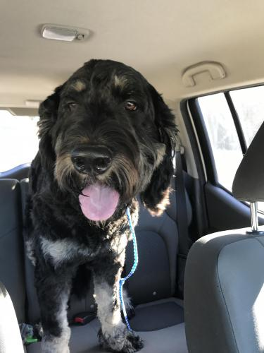 Found Male Dog last seen Near Clarke Central High School & Waddell St, Athens, GA 30605