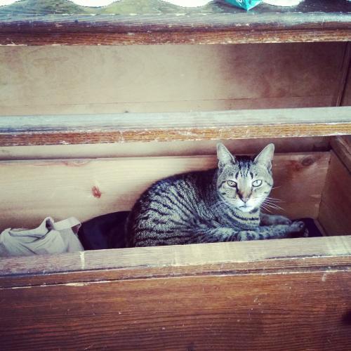 Lost Female Cat last seen Near Windy Hill Ct & Windy Hill Way, Athens, GA 30606