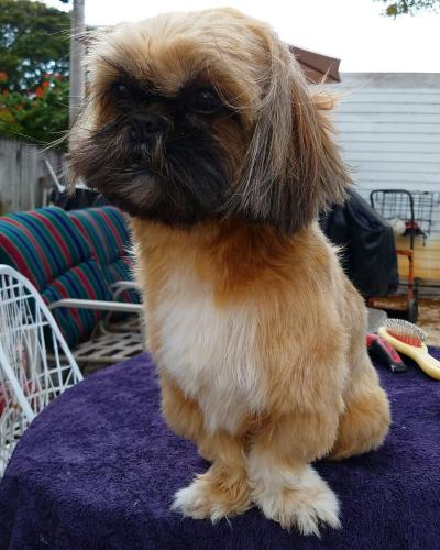 Lost Female Dog last seen Near SE 15th St & SE 3rd Ave, Pompano Beach, FL 33064