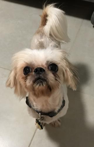 Lost Female Dog last seen Near NE 139th St & NE 11th Ave, North Miami, FL 33161