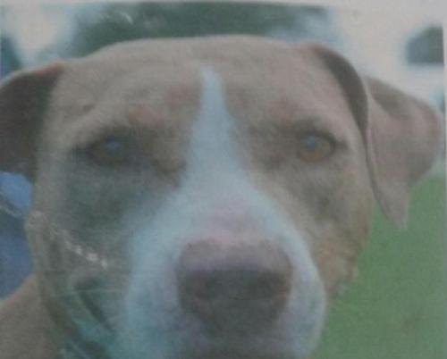 Lost Female Dog last seen Near Iowa Ave & W Dayton Cir, Fort Lauderdale, FL 33312
