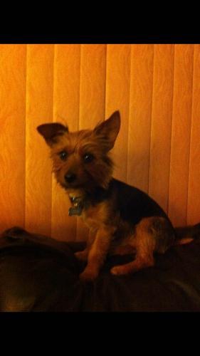 Lost Male Dog last seen Near Carlton Oaks Dr & Pebble Beach Dr, Santee, CA 92071