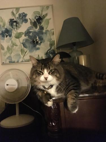 Lost Male Cat last seen Near Arrowhead Rd & American Way, Fargo, ND 58103