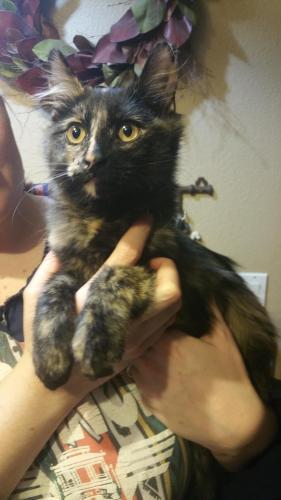 Found Female Cat last seen Near Blue Diamond Rd & Dean Martin Dr, Las Vegas, NV 89139