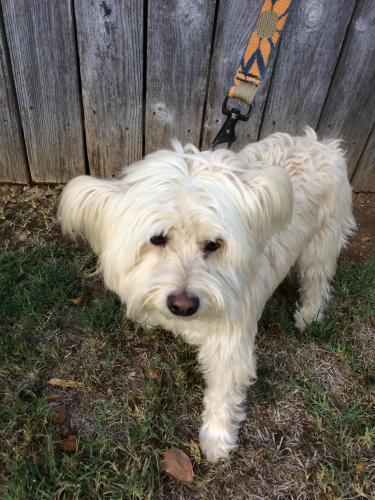 Found Female Dog last seen Near Maryal Dr & Lynwood , Sacramento, CA 95864