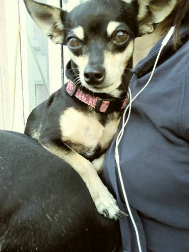 Lost Female Dog last seen Near E 48th St & Wall St, Los Angeles, CA 90011