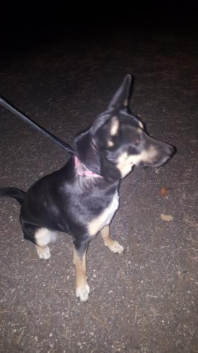 Found Female Dog last seen Near W 48th Ave & Garland St, Wheat Ridge, CO 80033