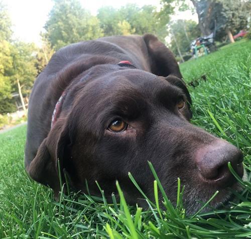 Lost Male Dog last seen Near Irisfield Dr & Flowerfield Dr, Draper, UT 84020