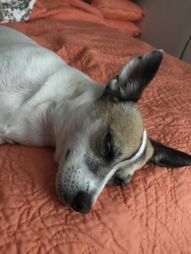 Lost Female Dog last seen Near 31st St & Ave J, Lubbock, TX 79411