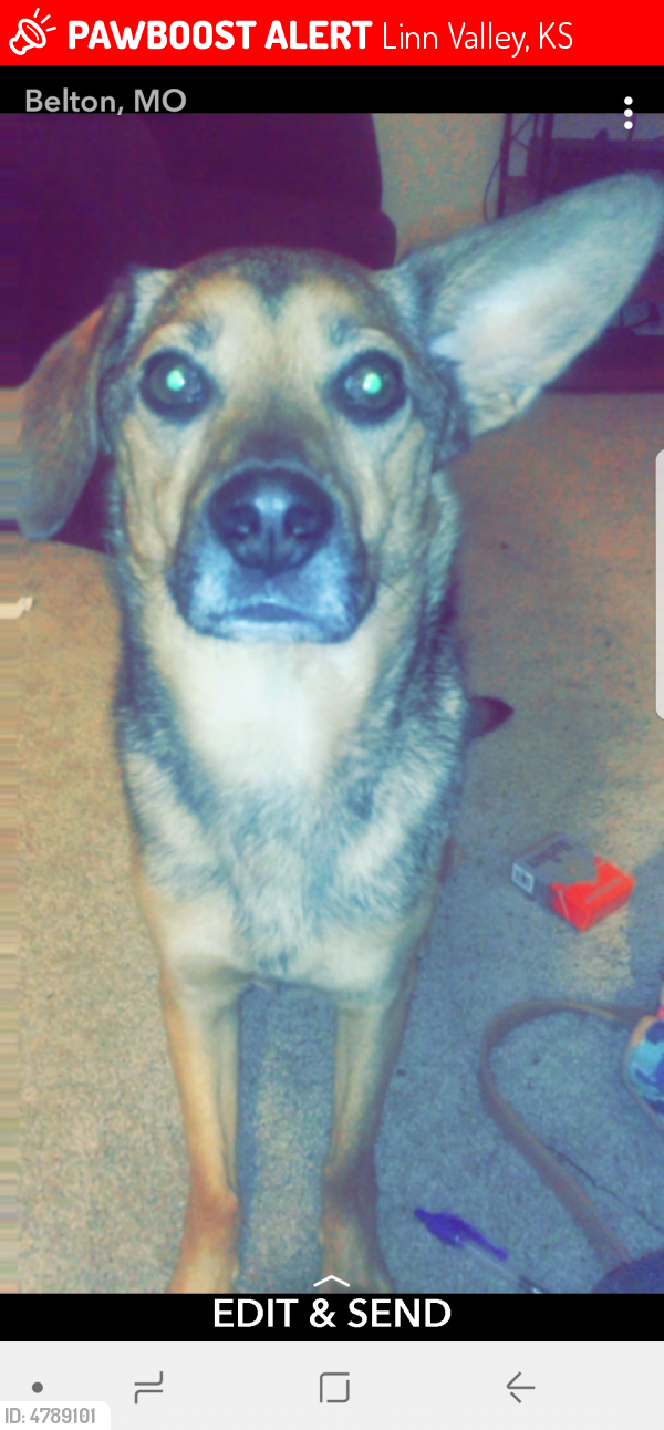 Lost Male Dog last seen Linn Valley Drive, Linn Valley, KS, Linn Valley, KS 66040