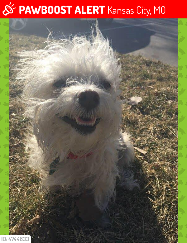 Lost Female Dog in Kansas City, MO 64105 Named Murphy (ID ...