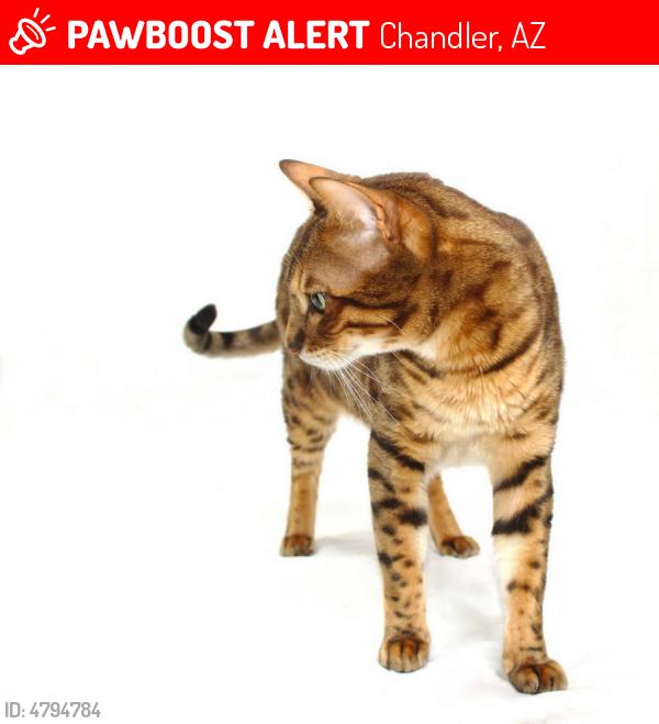 Brown spots in cat urine