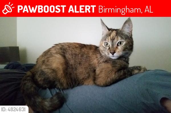 Lost Female Cat last seen Near 5th ave S & 41st St S, Birmingham, AL 35222