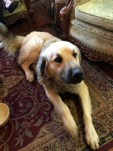 Found Male Dog last seen Near n Jackson st Athens tn, Athens, GA 30601