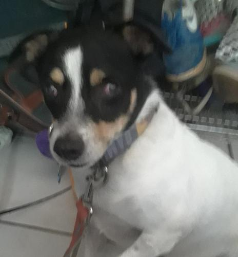 Found  Dog last seen , Dania Beach, FL 33004