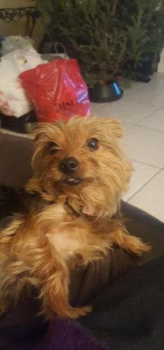 Found Female Dog last seen Near Pines Blvd & S Hiatus Rd, Pembroke Pines, FL 33025
