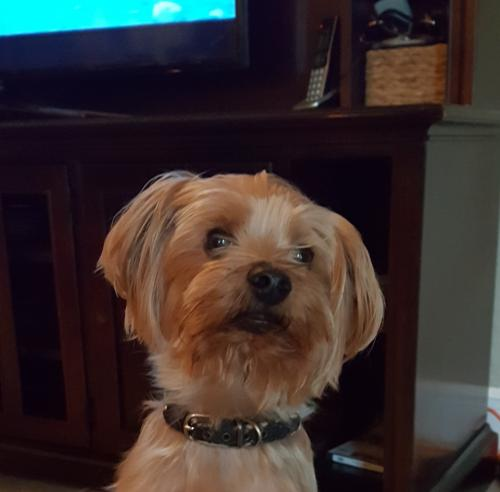 Lost Female Dog last seen Near NW 120th Dr & NW 76th Pl, Parkland, FL 33321