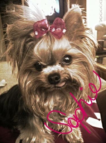 Lost Female Dog last seen Near Desperado Drive, Waco, TX, Waco, TX 76708