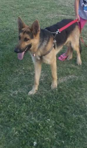 Lost Male Dog last seen Near N Atlanta Ave & E Virgin St, Tulsa, OK 74110