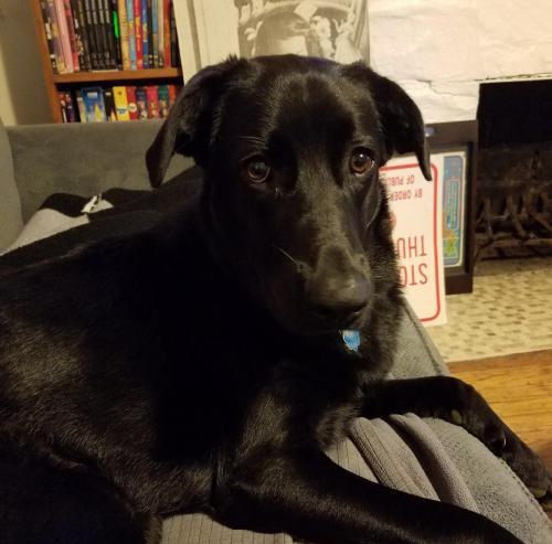 Lost Female Dog last seen Near Simpson Ave & P Poole St, Chattanooga, TN 37415
