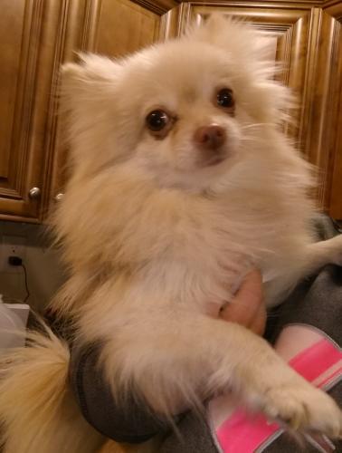 Found Female Dog last seen Near 14th View St & W Ocean View Ave, Norfolk, VA 23503