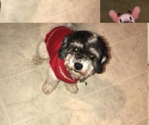 Lost Male Dog last seen Near Aldrich Ave N & 23rd Ave N, Minneapolis, MN 55411