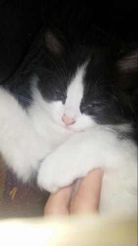 Lost Male Cat last seen Near Indianola Ave & E Weisheimer Rd, Columbus, OH 43214