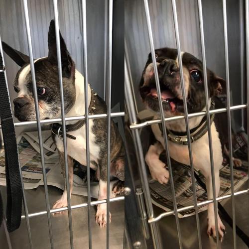 Found Unknown Dog last seen Near Potranco Rd & American Lotus, San Antonio, TX 78253