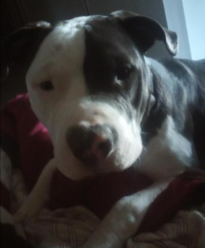 Lost Male Dog last seen Near 60th St N & Crestmont Ave, Clearwater, FL 33760