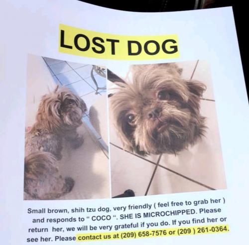 Lost Female Dog last seen Near Peach Ave & Hammatt , Livingston, CA 95334