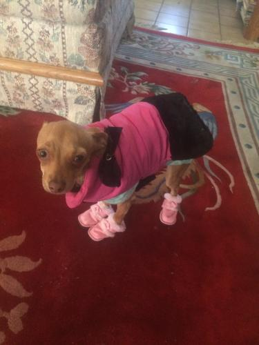 Lost Female Dog last seen Longfellow&31st.st.minneapolis, Minneapolis, MN 55406