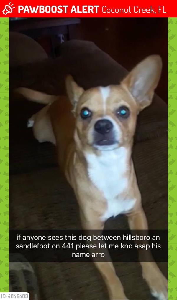 Lost Male Dog in Coconut Creek, FL 33073 Named Arro (ID