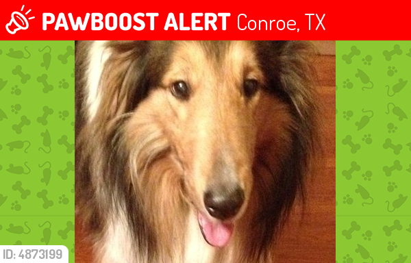 Deceased Male Dog last seen Near N Thompson St, Conroe, TX 77301